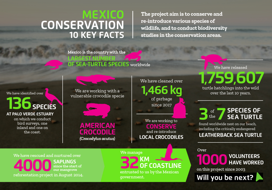 Interesting facts about conservation volunteering in Mexico with projects abroad